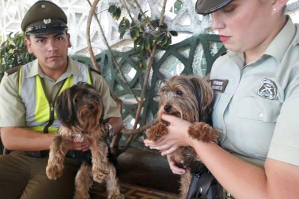 Perros son rescatados del interior de un auto