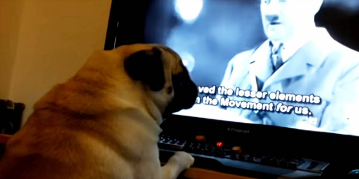 Condenan a youtuber por enseñarle el saludo nazi a su perro