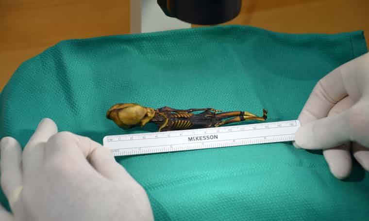 Revelan la verdad tras el esqueleto de bebé alien en Atacama