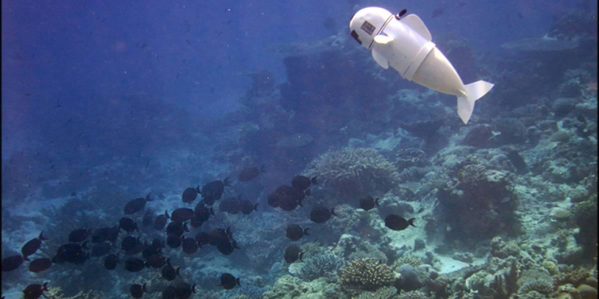 Pez robot espía a las especies marinas para conocer sus misterios