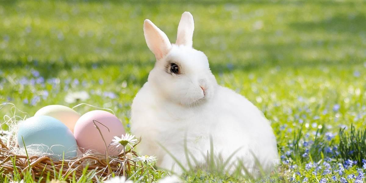 A origem dos símbolos da Páscoa: por que ovos de chocolate e coelho?