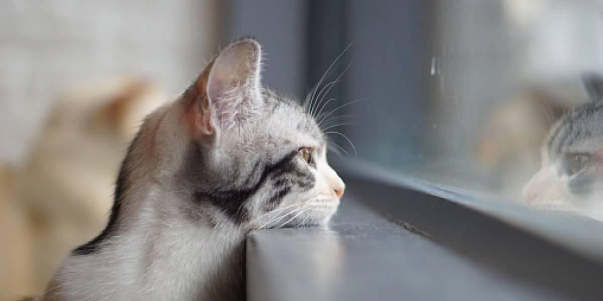 Perdió a su gata en la mudanza y cuando llegó a la casa nueva la encontró en el lugar menos inesperado