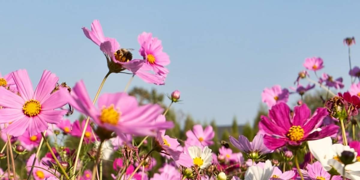 Las abejas están regresando gracias al confinamiento humano