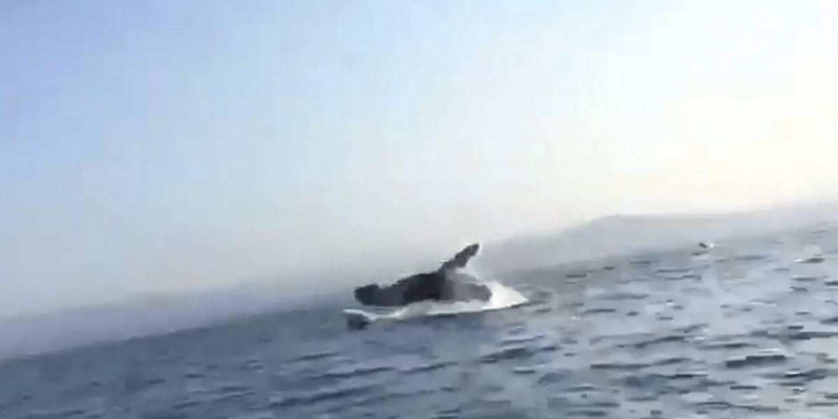 Video: Ballena cae sobre lancha de turistas en Puerto Escondido