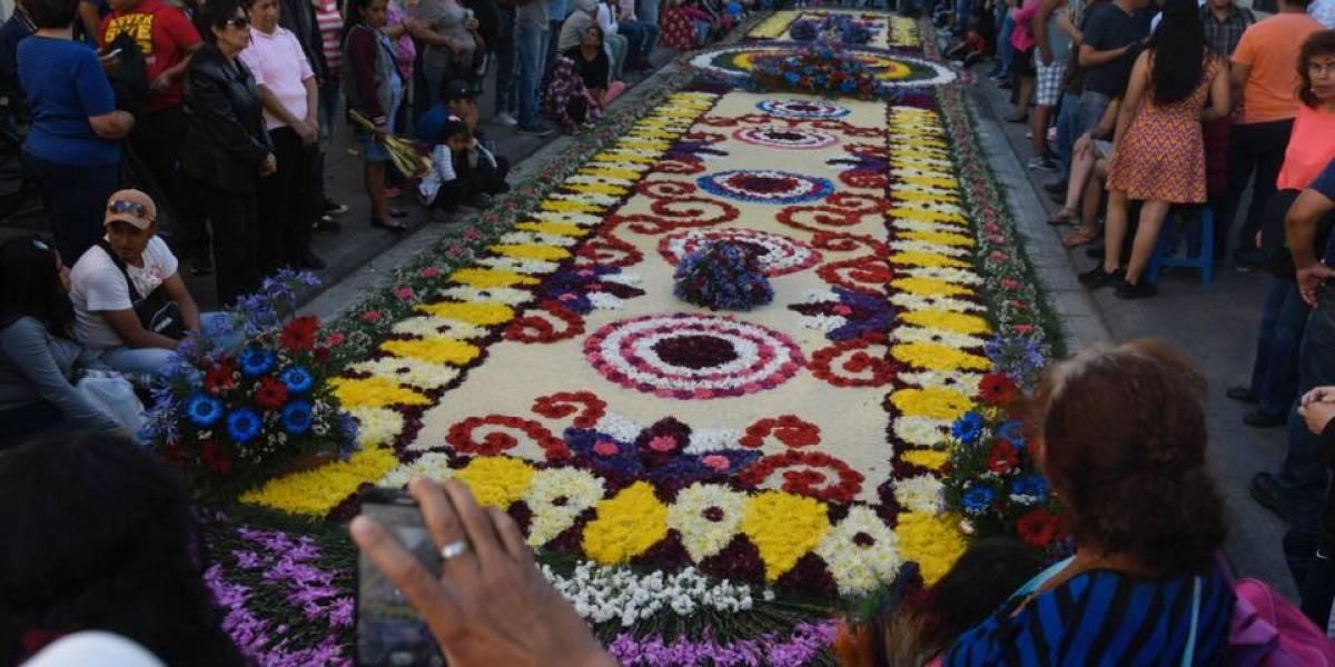 Extraordinaria alfombra de flores deslumbra a guatemaltecos en Sexta Avenida