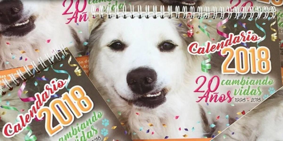 AMA rebaja el precio de su calendario para recaudar fondos y seguir ayudando animales