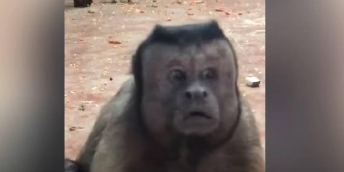 Mono se hace famoso por video con cara de preocupación