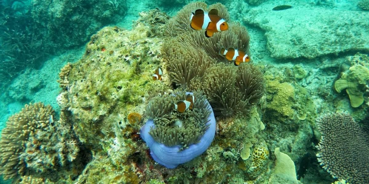 Una esponja marina, la posible clave de la cura del cáncer