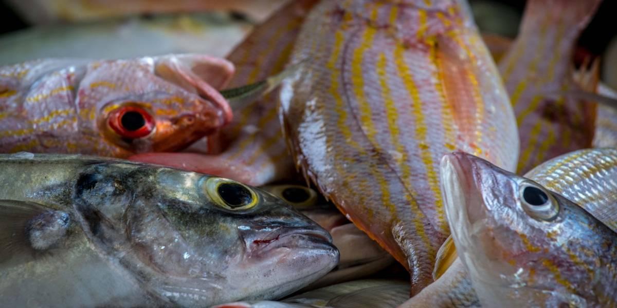 Piden consumir pescado local para ayudar a afectados por María