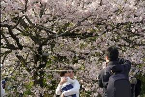 Una familia toma fotos de las flores de cerezo en Chidorigafuchi, Tokio, el lunes, 26 de marzo del 2018. Los famosos cerezos japoneses alcanzaron plena floración en Tokio, donde la primavera se está haciendo sentir.