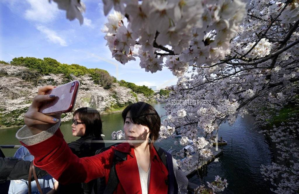Una mujer se toma un selfie delante de flores de cerezo en el Chidorigafuchi, Tokio, el lunes, 26 de marzo del 2018. Los famosos cerezos japoneses alcanzaron plena floración en Tokio, donde la primavera se está haciendo sentir.