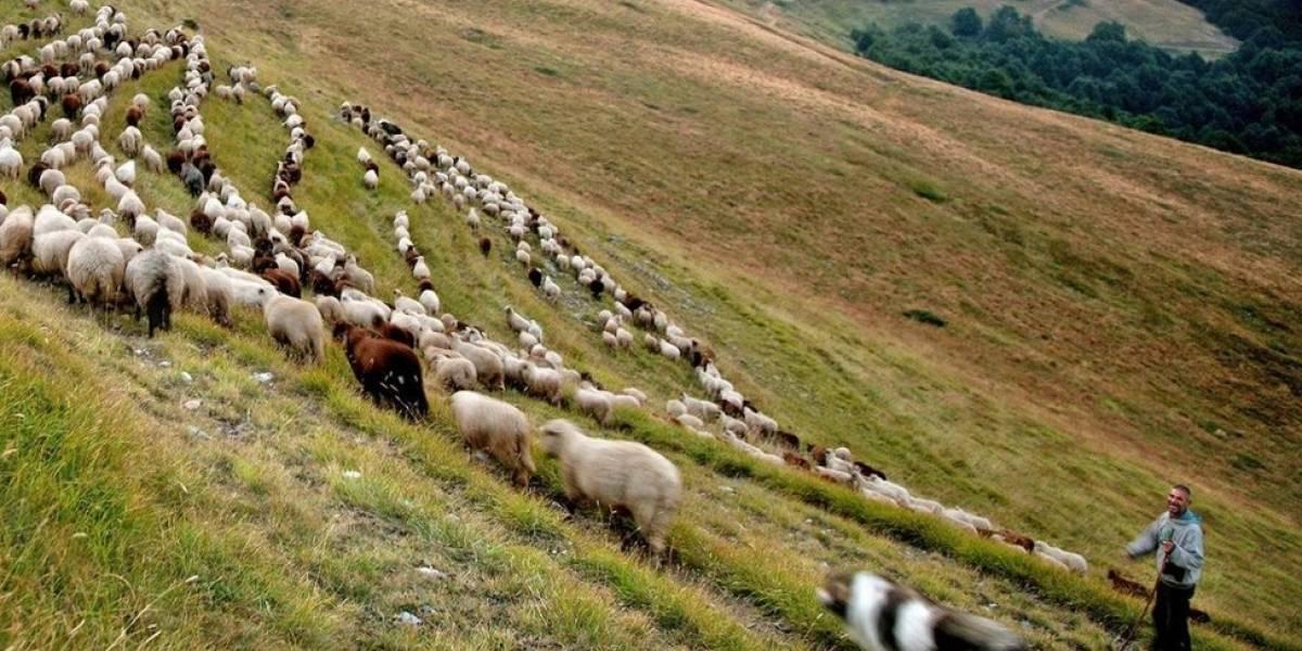 Roban tres reses de vaquería en Hatillo
