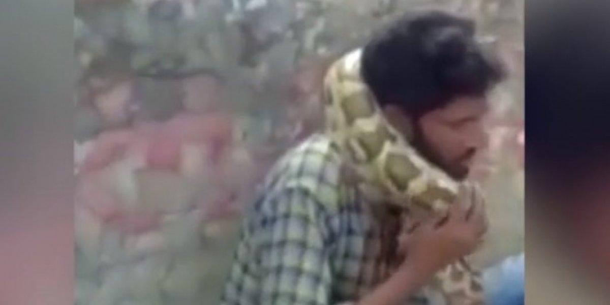 Encantador de serpentes quase morre estrangulado por píton durante show