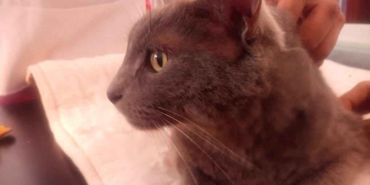 FOTOS. Rescatan a gato atrapado en alambre de púas y buscan quién lo adopte