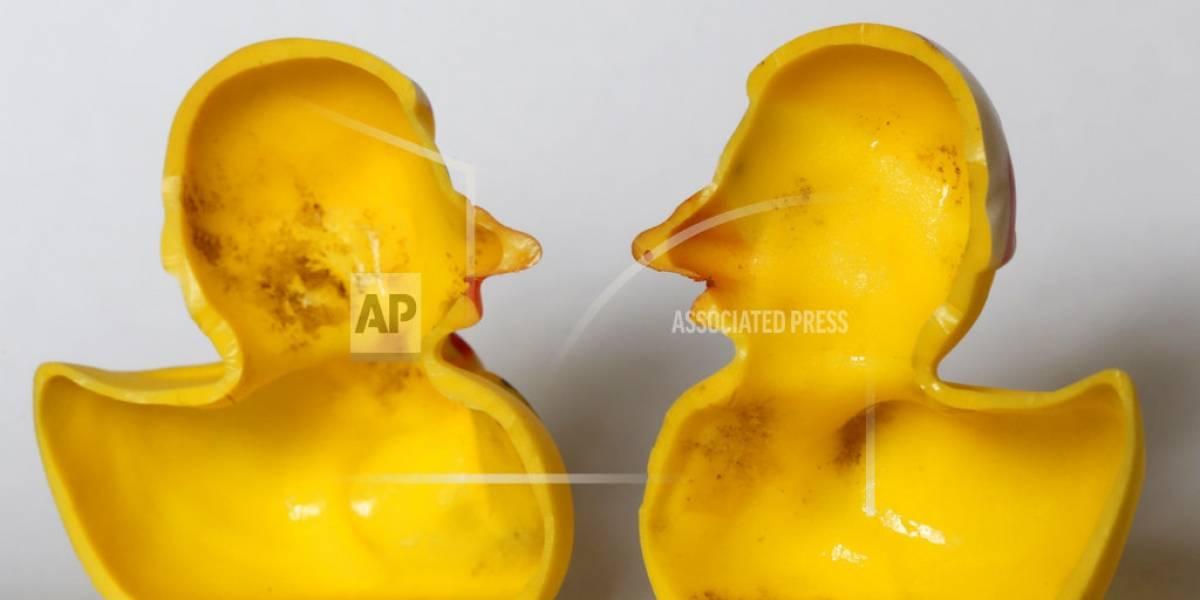 Estudio revela secreto sucio de los patitos de juguete
