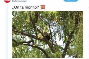Mono en Reforma