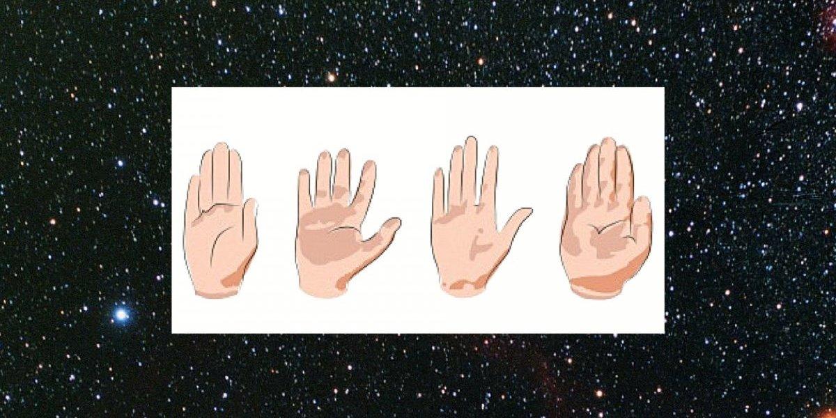 O que a forma dos seus dedos pode revelar sobre você?