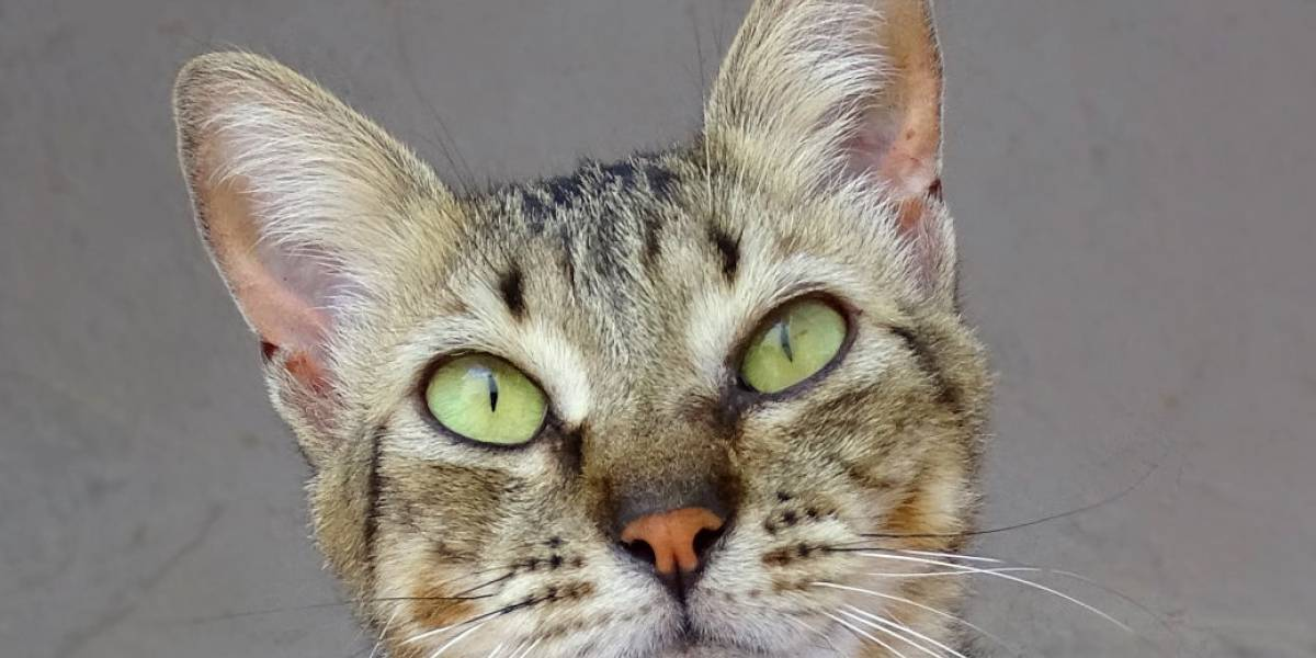 Sites legais para quem quer adotar um gatinho em São Paulo
