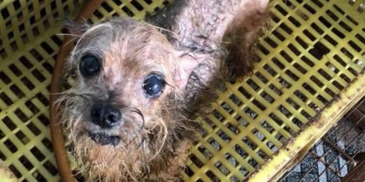 Mais de 100 cães, gatos e aves vítimas de maus-tratos são resgatados