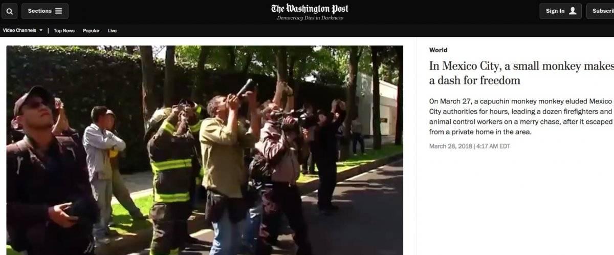 Cobertura del Washington Post sobre el mono capuchino