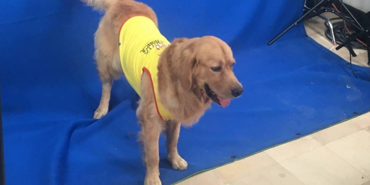 Encontraron a Coloso, la mascota de Barcelona SC que estaba desaparecido desde el 12 de julio