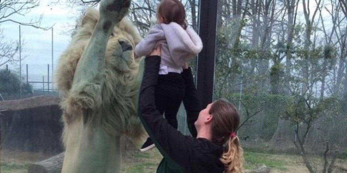 Pais gravam 'leão fofo' em zoológico, mas a verdade por trás do vídeo é bem diferente