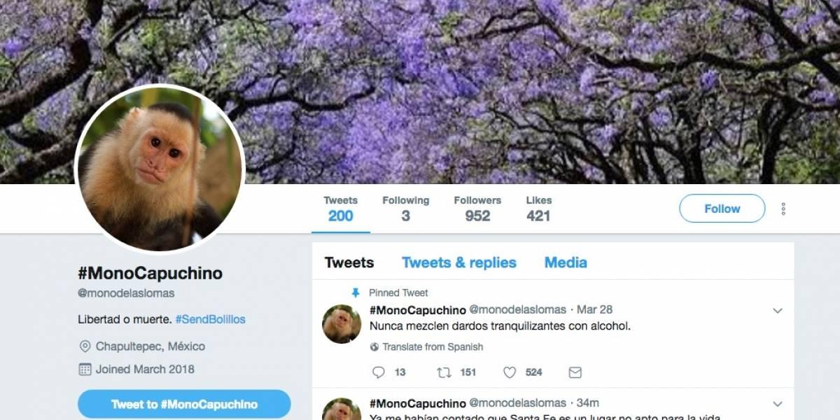 El Mono de las Lomas 'abre' su cuenta de Twitter y esto fue lo que escribió