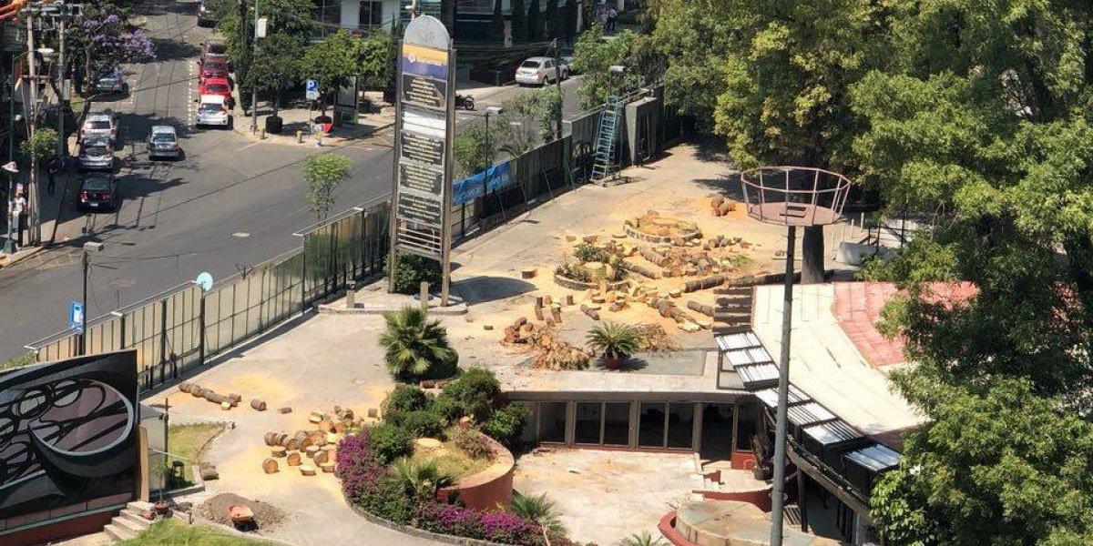 Derriban árboles en Polyforum Siqueiros mientras todos están de vacaciones
