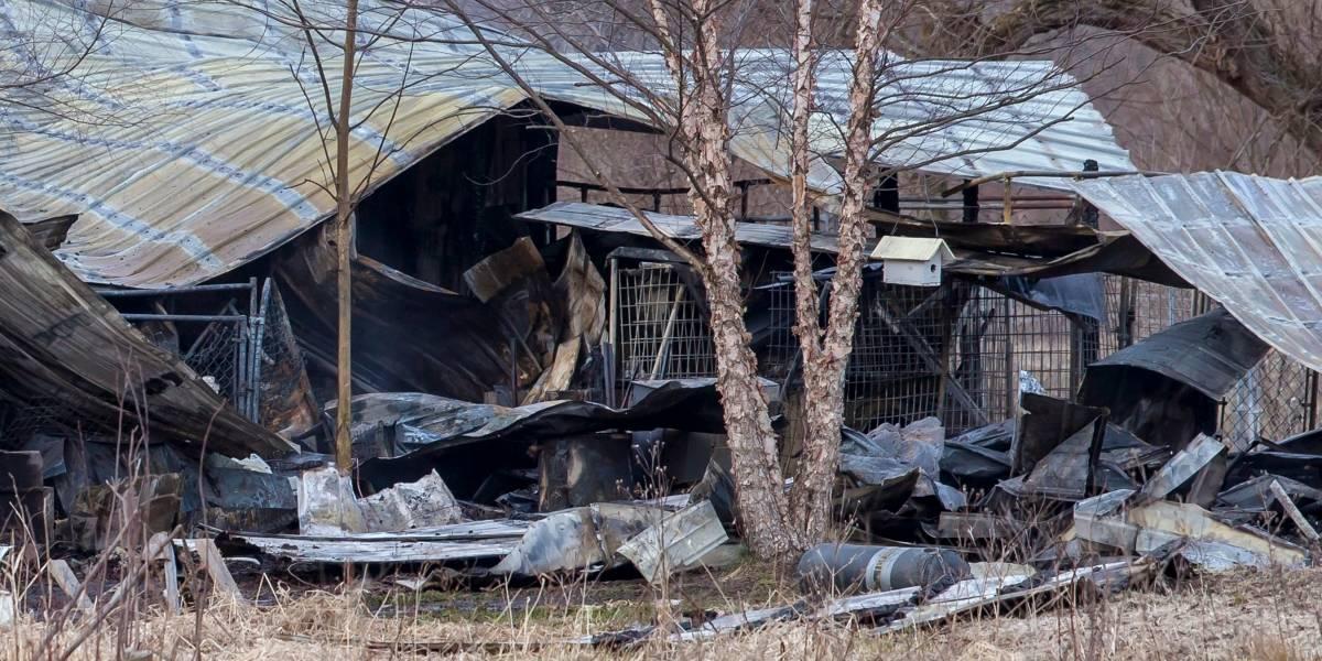 Mueren 30 perros en incendio de guardería canina