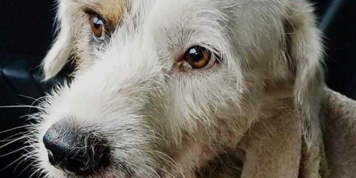 Policía busca responsable de cruel maltrato contra perro callejero en Morovis