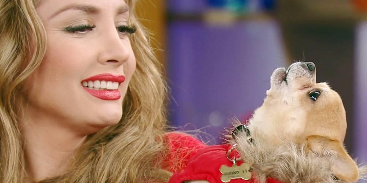 ¿Paty Navidad alista su nuevo éxito? Canta a dueto con su perro
