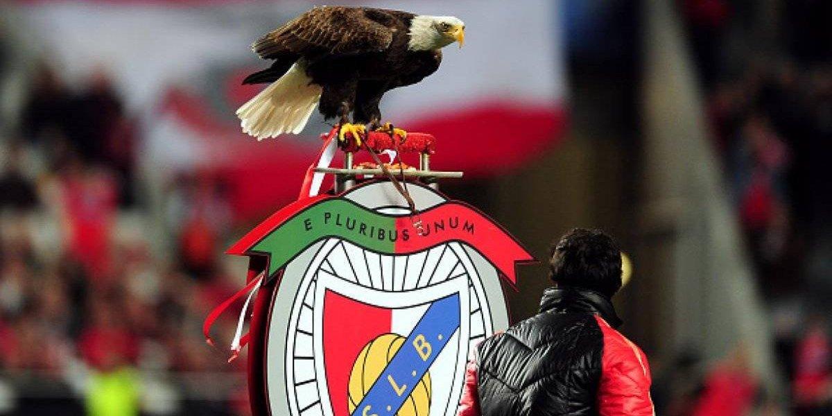 El insólito caso del águila de Benfica: se fue del estadio y volvió ¡un día después!