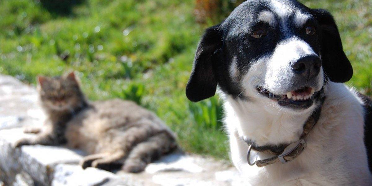 Pessoas que cometerem maus-tratos não poderão adotar animais em São Paulo