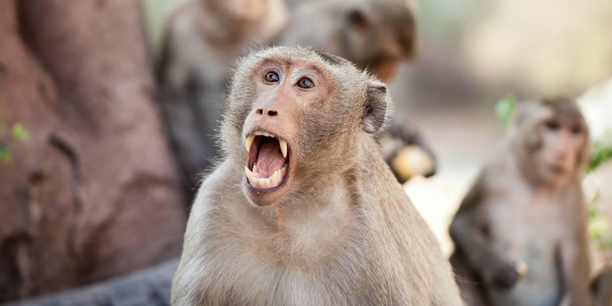 """Mono roba recién nacido desde """"los brazos"""" de su madre"""