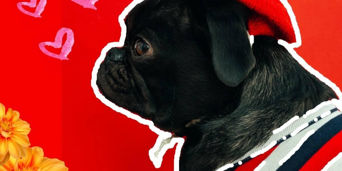 Las cuatro razas de perros que se llevan mejor con niños