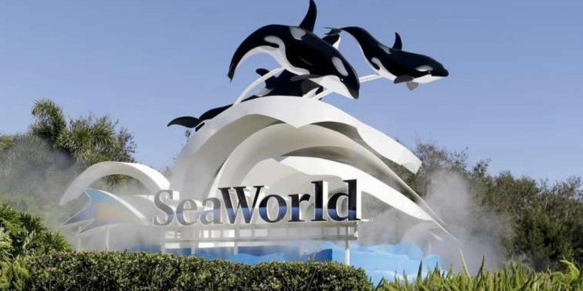 Seaworld cambiará show de orcas por uno más educativo