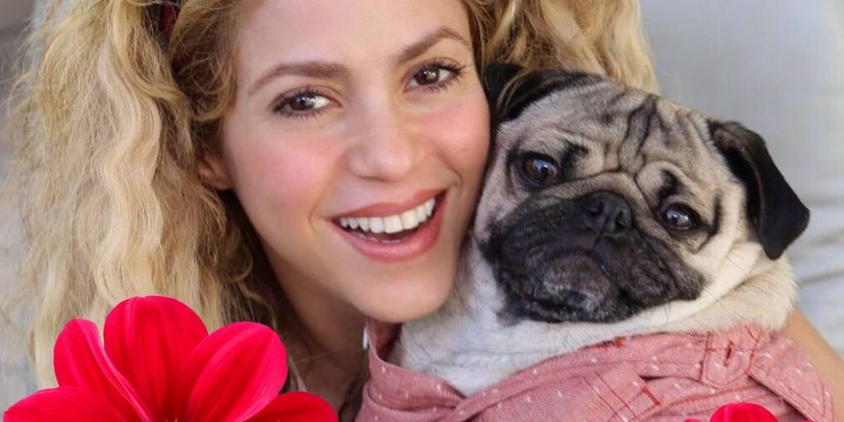 Esta enfermedad podría dejar calva a Shakira