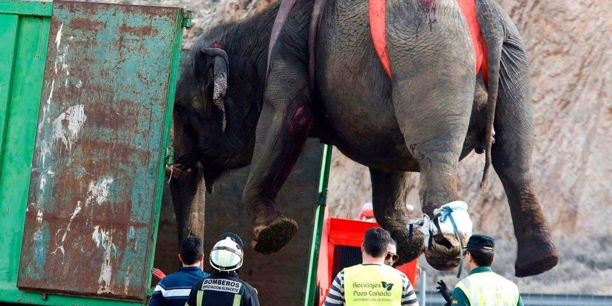 Muere un elefante tras accidente de camión de circo en España