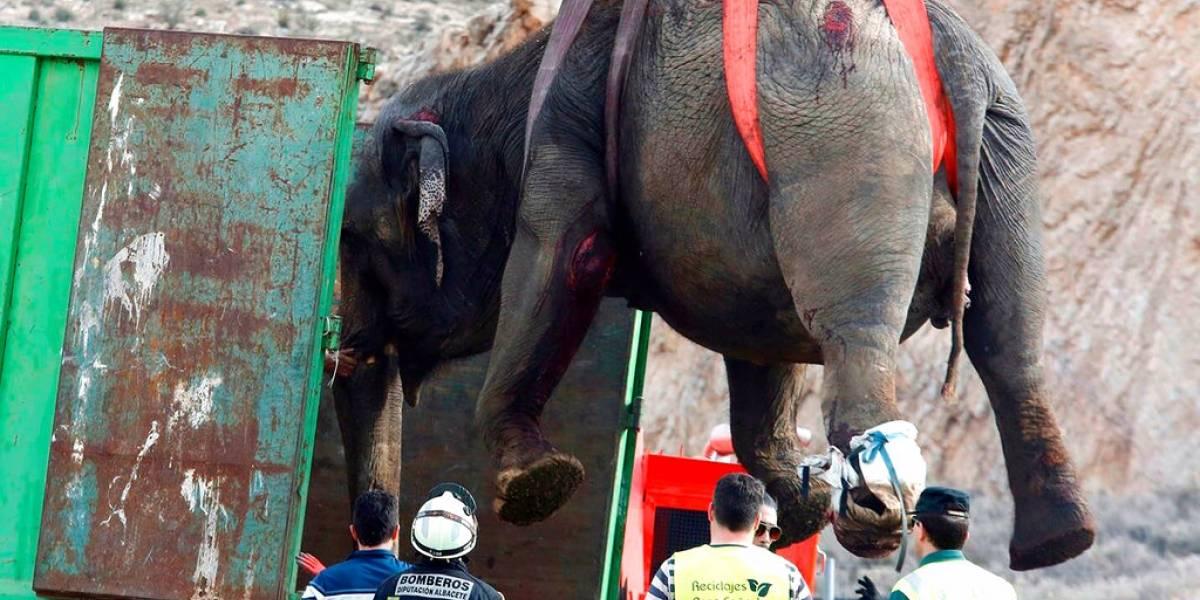 Un elefante murió al volcar un camión de circo en España