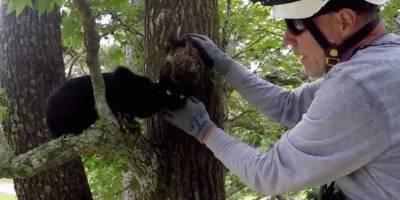 Este hombre dedica su vida a salvar gatos de los árboles