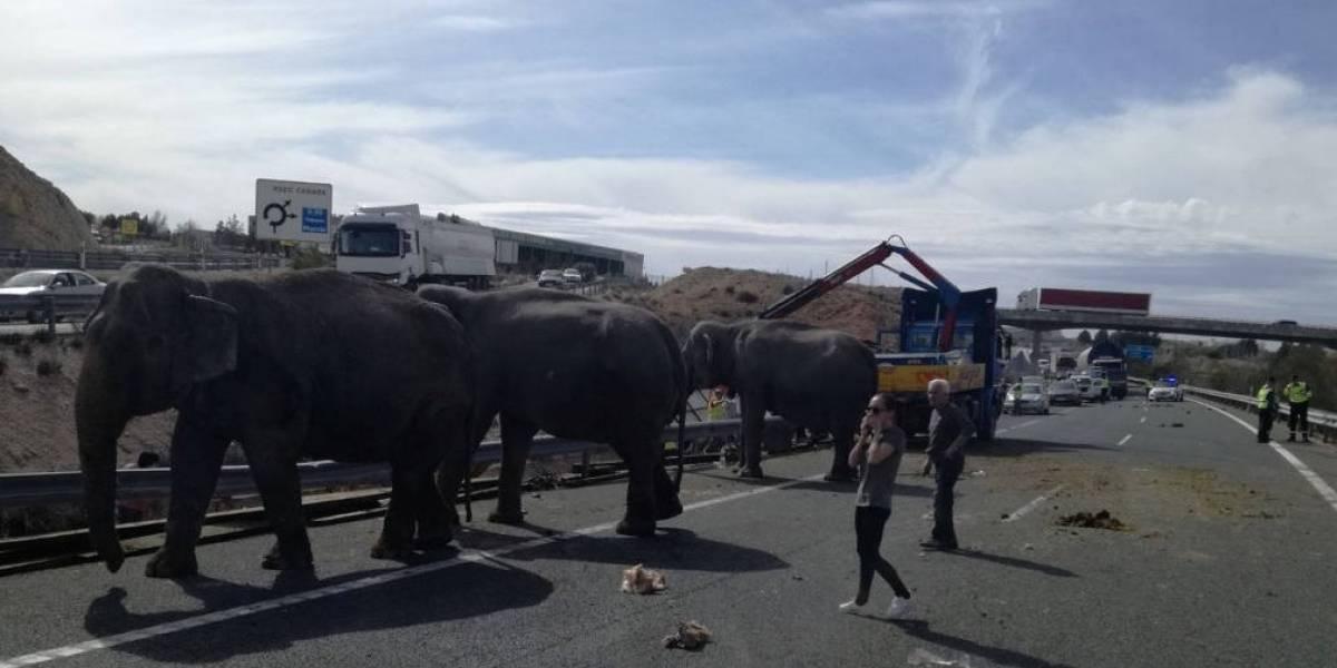 Elefante morre em acidente com caminhão de circo na Espanha