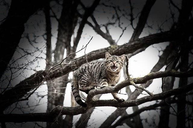 Gato atrapado en árbol