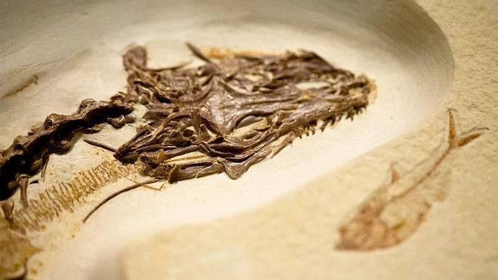 Lagartija de 4 ojos vivió en la tierra hace 49 millones de años