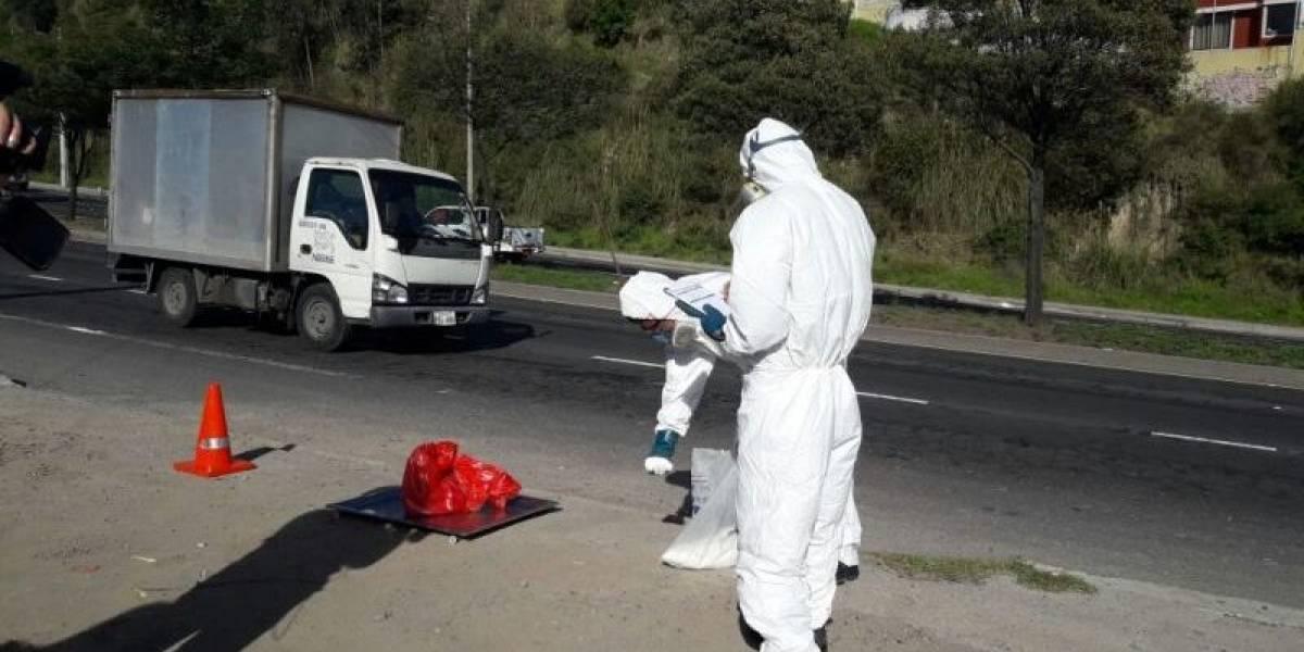 Emaseo aclara acusación de mal manejo de animales muertos en Quito