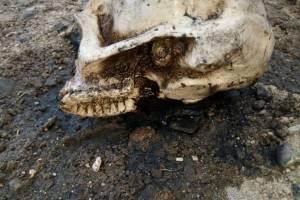 Cráneo de yeso