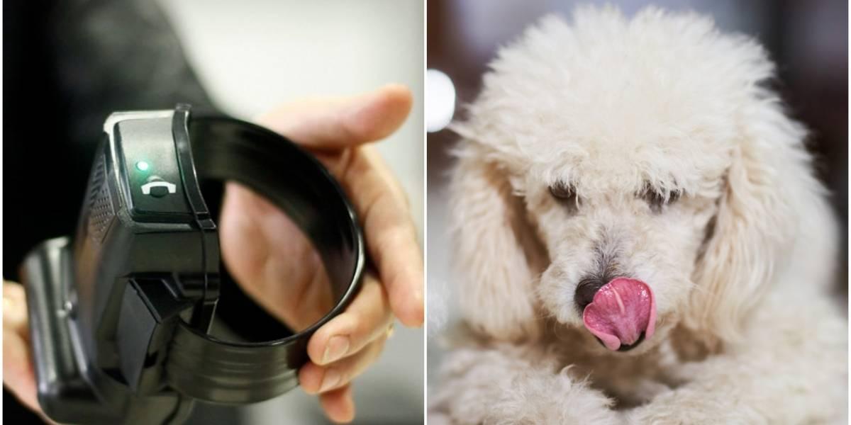 Mujer estaba con arresto domiciliario y le ponía la tobillera electrónica a su poodle para salir a robar