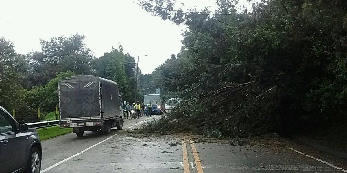 Fuertes trancones en la vía a La Calera por la caída de un árbol