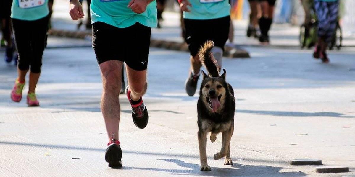 Muere corredor de la Maratón de Santiago tras paro cardiorrespiratorio