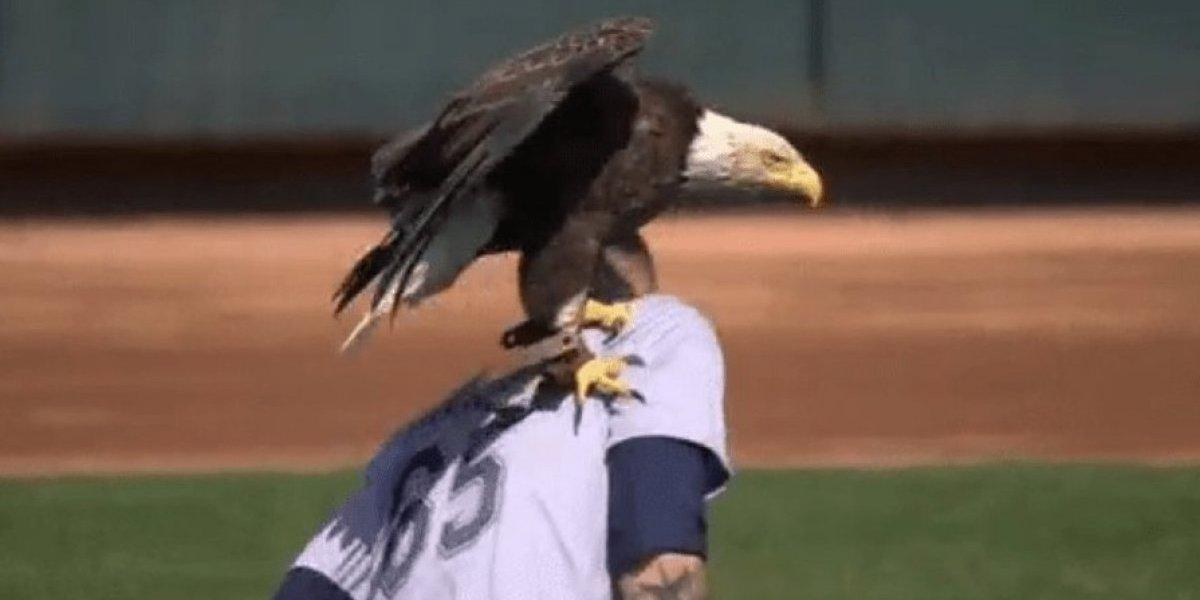 Lanzador de las Grandes Ligas es 'atacado' por águila