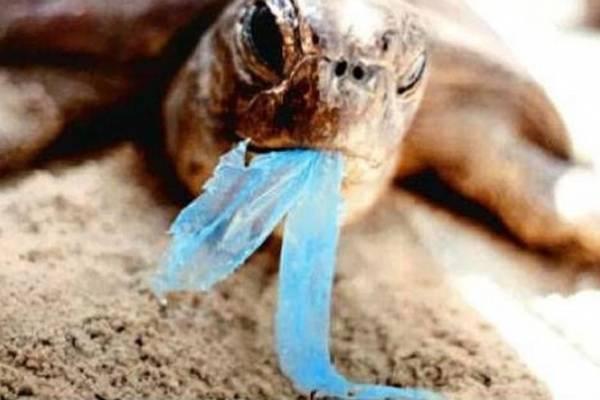 bolsas-plásticas-contaminación